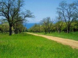 учкуевка севастополь