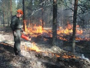 пожары в севастополе