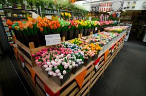 цветочный рынок на Очаковцев реконструируют