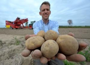 картошка цена в Севастополе