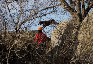 собаки-поисковики севастополь