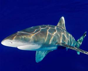 Врач убил акулу ножом