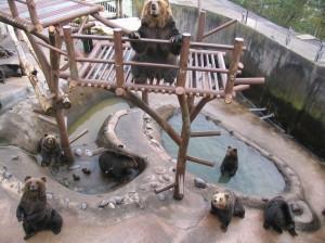 парк медведей в Севастополе