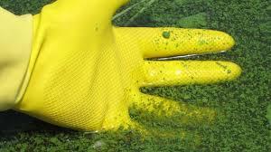 водоросли из крана Севастополь