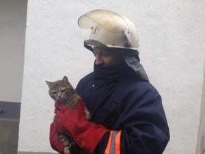 спасли кота