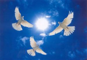 призвали к миру