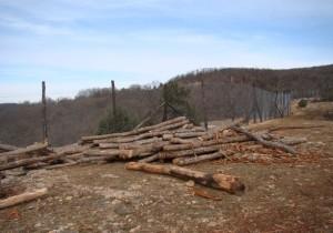 на мысе Айя вырубили лес