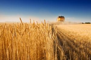 Крым принесет России увеличение урожая зерна почти на 2 млн тонн