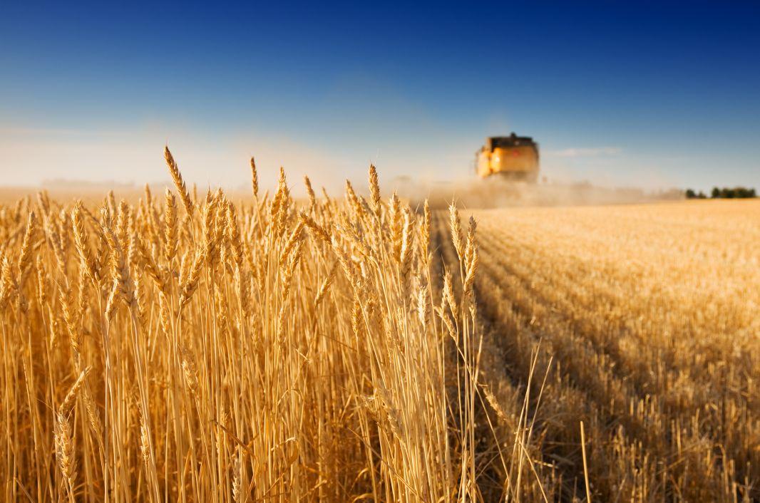 В Крыму обнаружили 711 тонн ядовитого зерна