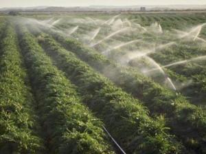В чем выгоды инвестирования в сельхозугодья Болгарии?