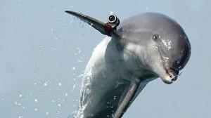 украина заберет боевых дельфинов Севастополя