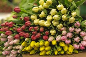 Ученые определили как продлить жизнь срезанных цветов