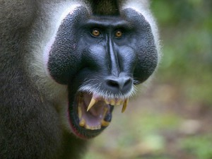 обезьяна загрызла ребенка