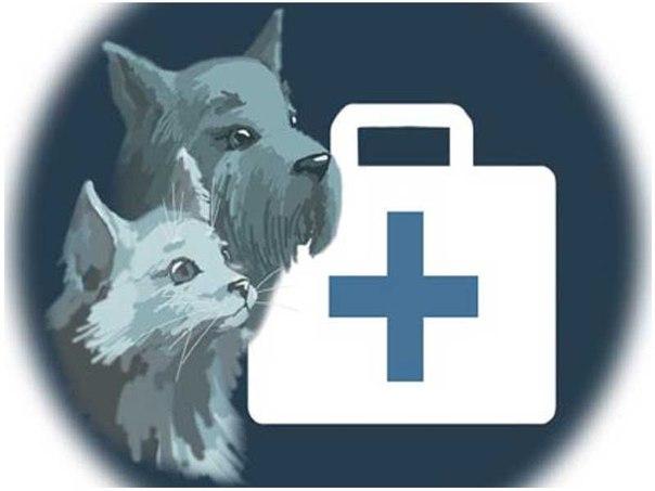 4 июня в Севастополе пройдет семинар для ветеринаров