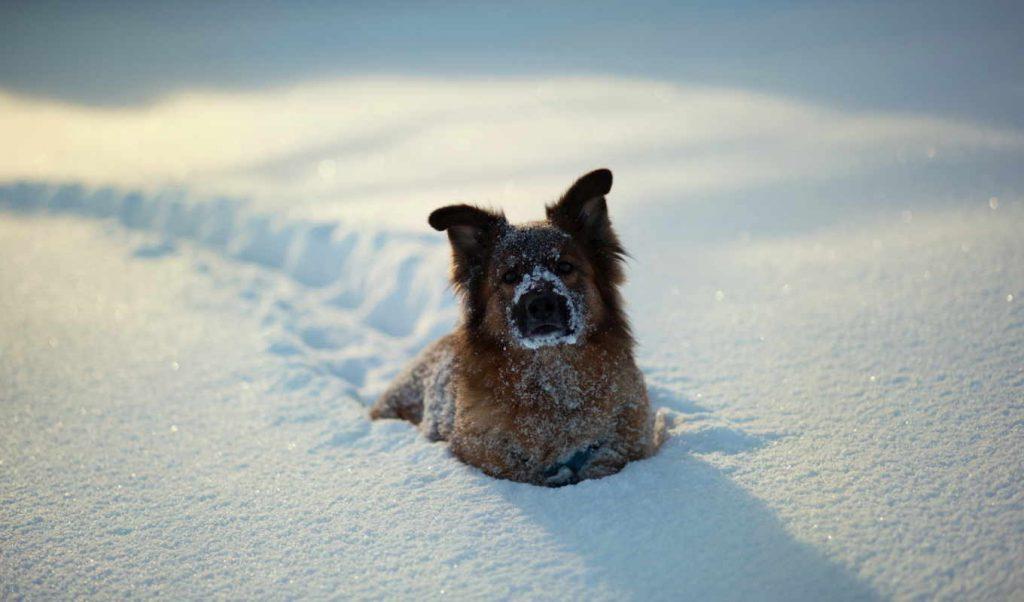 В Крыму выпал первый снег (ФОТОФАКТ)