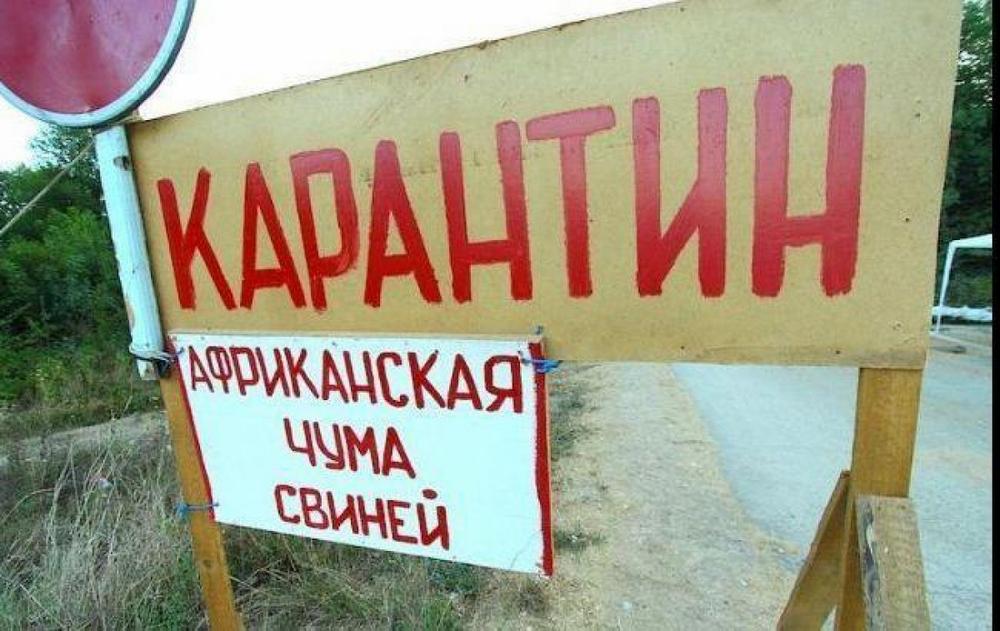 В крымском селе из-за африканской чумы свиней ввели карантин