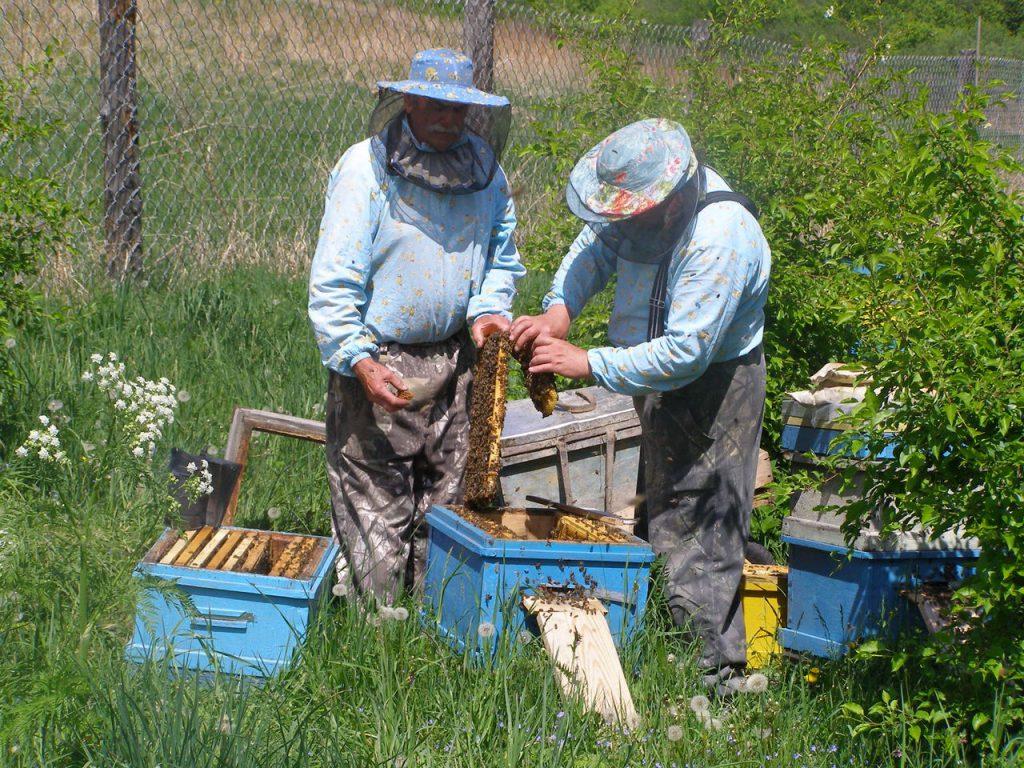 Севастопольские пчеловоды бьют тревогу