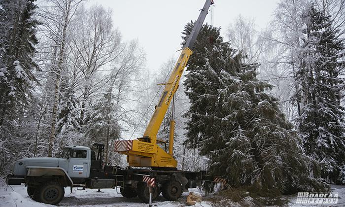 В Вологде торжественно срезали главную симферопольскую елку (ВИДЕО)