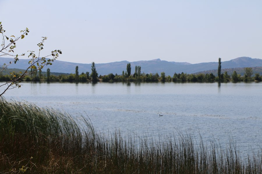Севприроднадзор призывает севастопольцев бережно относиться к прибрежным территориям