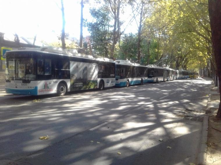 Рухнувшее дерево парализовало транспорт в Симферополе (ФОТО)