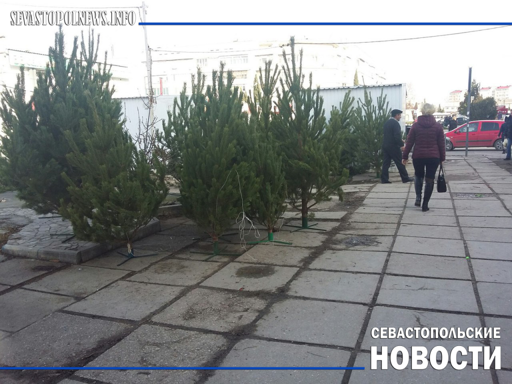 Севастопольцы умудрились забить новогодними елками мусоропроводы