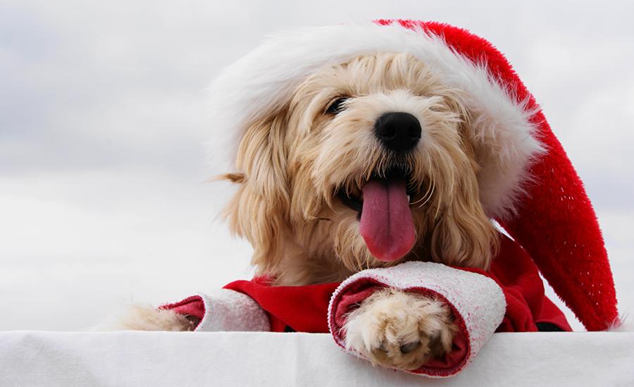 Новый год 2018. Готовимся к встрече желтой земляной собаки