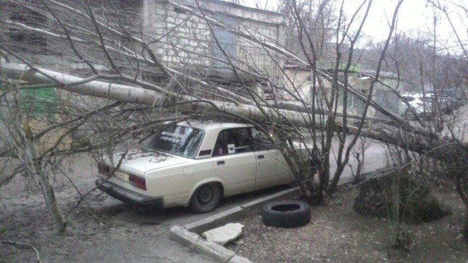 В Севастополе ураганный ветер валит деревья на автомобили (ФОТО)