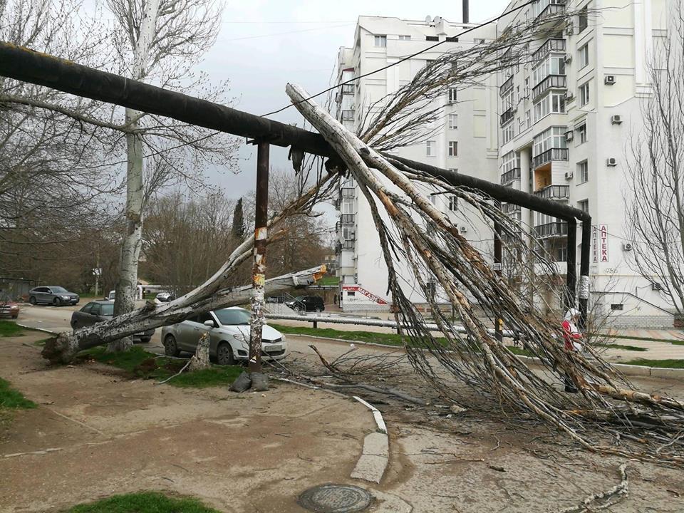 В Севастополе из-за сильного ветра начали падать деревья (ФОТО)